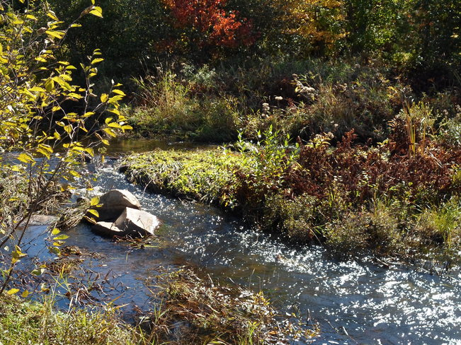 A babbeling brook by the park Elliot Lake, Ontario Canada