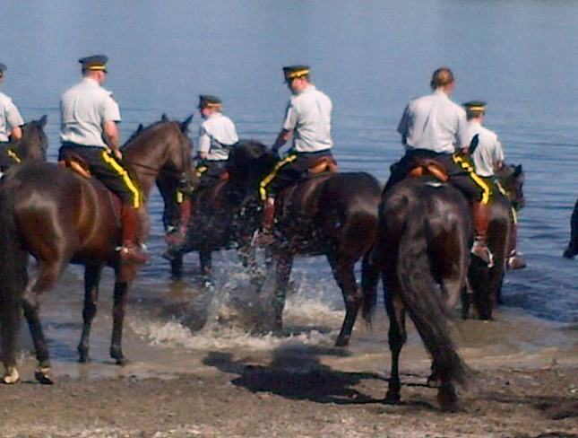 RCMP Horses enjoying warm weather and water Ottawa, Ontario Canada