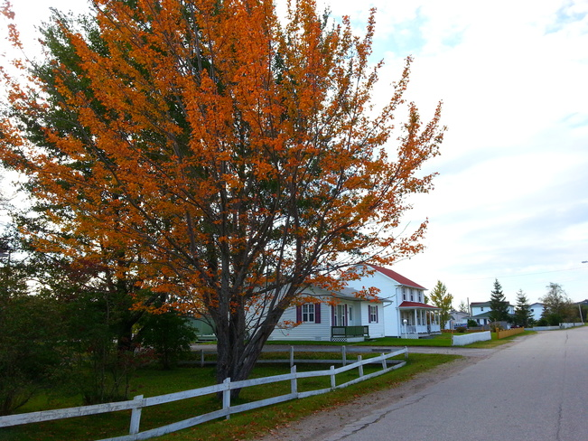 Oct 3 Gambo, Newfoundland and Labrador Canada