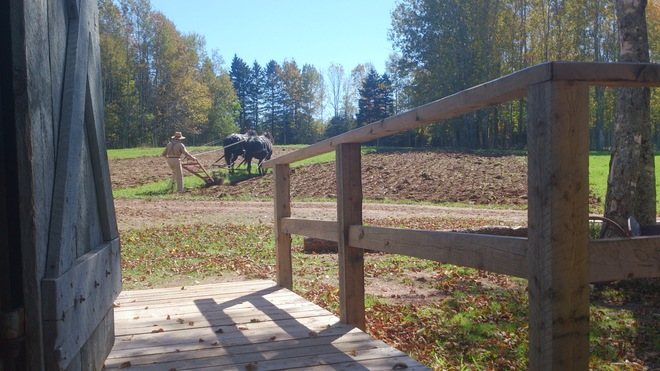 What a day to be horsing around on the New Ross Farm New Ross, Nova Scotia Canada