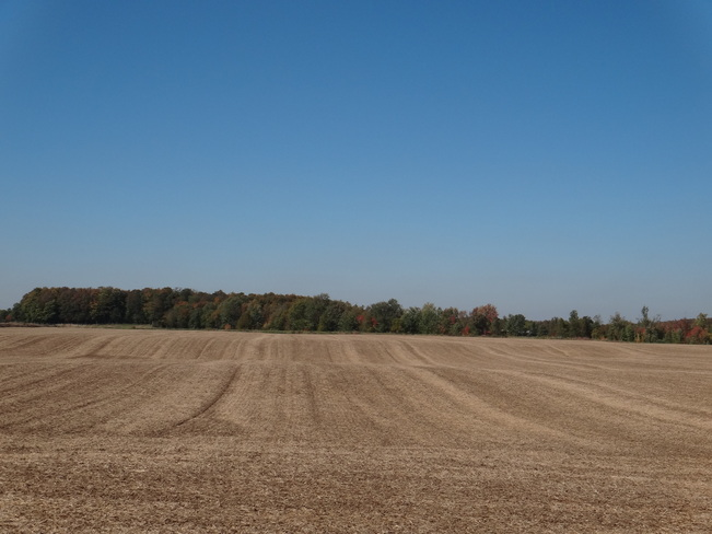 Field after harvest Clifford, Ontario Canada