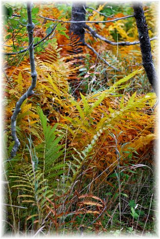 Changing colours Marystown, Newfoundland and Labrador Canada