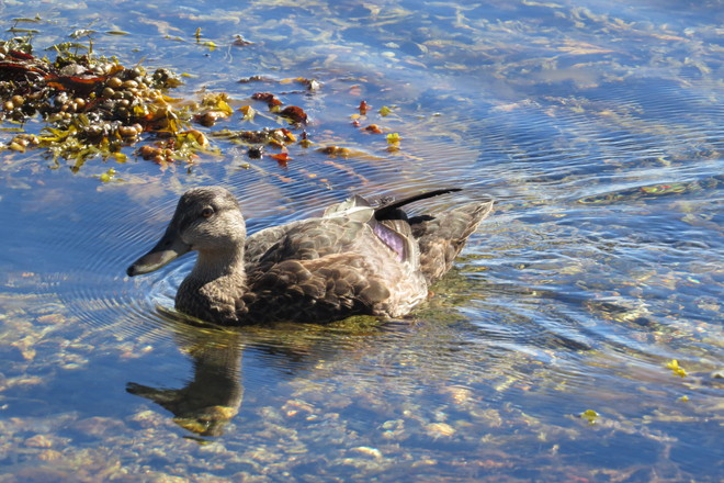Daphne Swimming Chester, Nova Scotia Canada