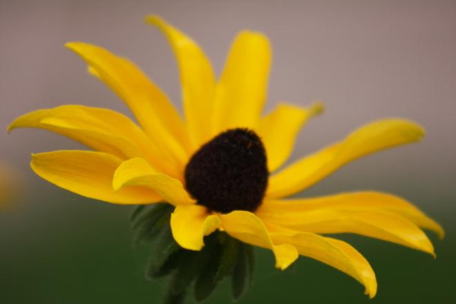 Last bloom Timmins, Ontario Canada