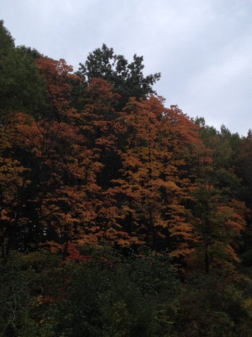The colour of fall. Fonthill, Ontario Canada