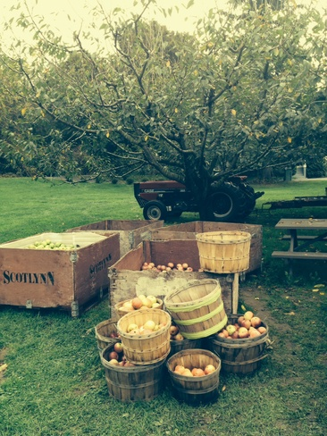 The joy of apple farming in one Fonthill, Ontario Canada