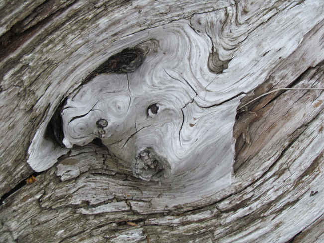 dog in driftwood! Abbotsford, British Columbia Canada