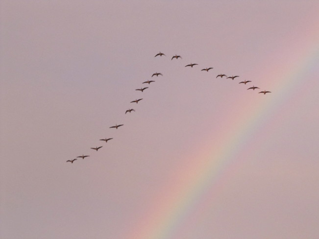 Geese & A Double Rainbow Châteauguay, Quebec Canada