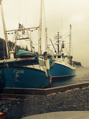 beautiful boats Rocky Harbour, Newfoundland and Labrador Canada