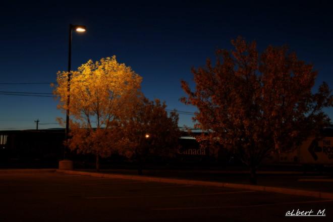 the lamp post Calgary, Alberta Canada