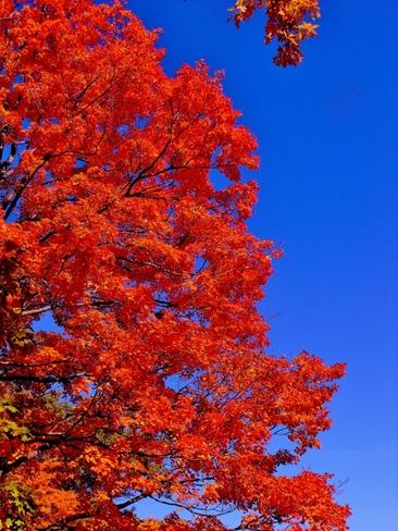 autumn colors Kitchener, Ontario Canada