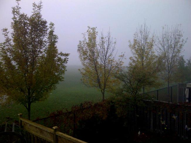 Foggy Morning Mississauga, Ontario Canada