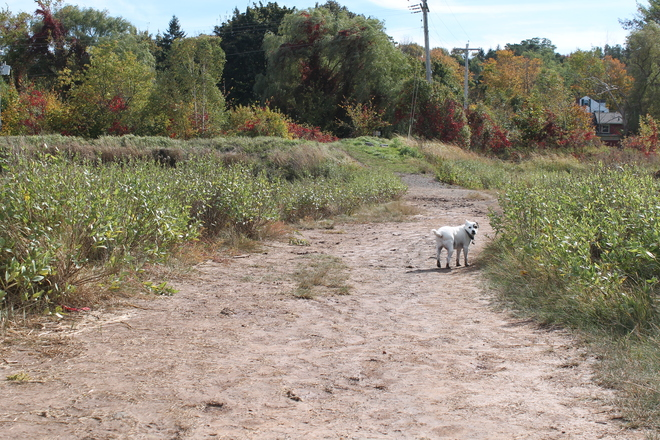 Are you coming for a walk or not on this Great Fall Day in Wolfville? Wolfville, Nova Scotia Canada