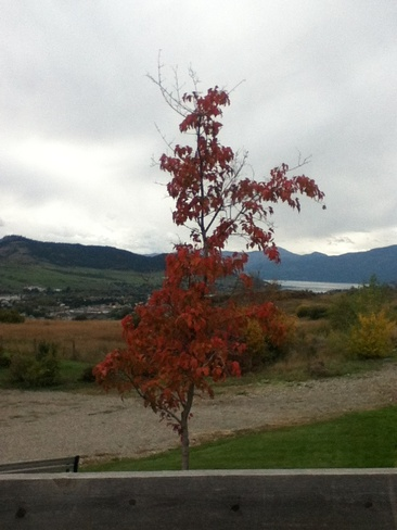 overcast but beautiful day! South Vernon, British Columbia Canada