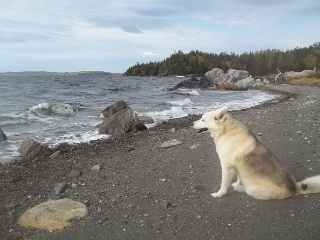 watching The Waves Birchy Bay, Newfoundland and Labrador Canada