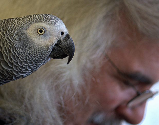 Parrot & Care Giver