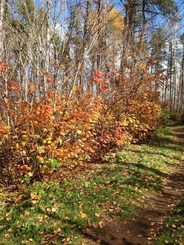 fall beauty Thunder Bay, Ontario Canada