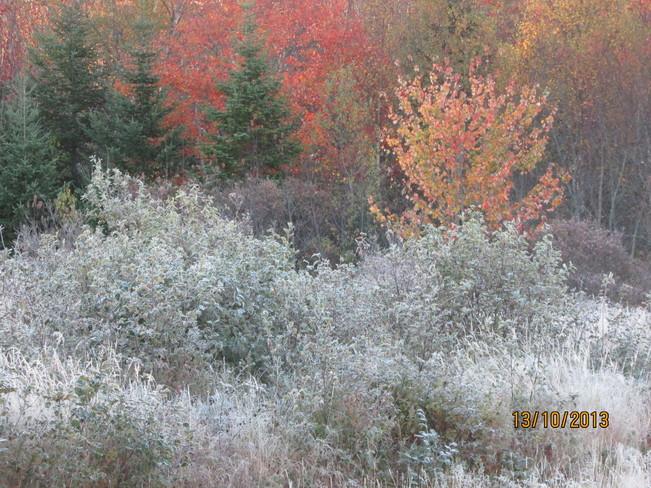 first frost.. Joggins, Nova Scotia Canada