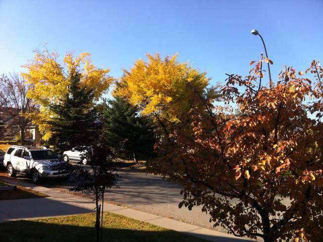 fall day Calgary, Alberta Canada