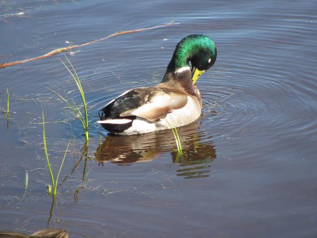 Cobbs Pond Gander, Newfoundland and Labrador Canada