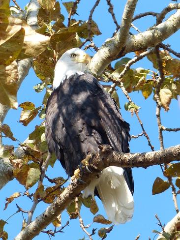 Eagle Delta, British Columbia Canada