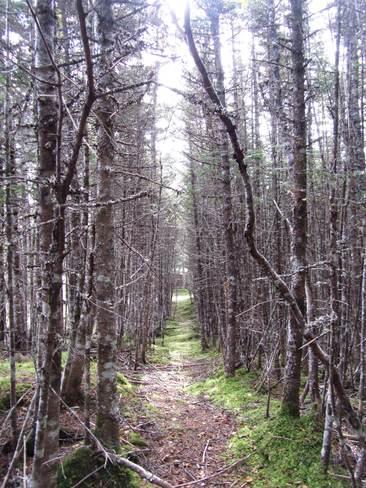 Through the tree Salmonier, Newfoundland and Labrador Canada