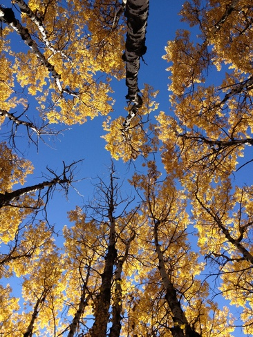 looking up to the sky of yellow Red Deer, Alberta Canada