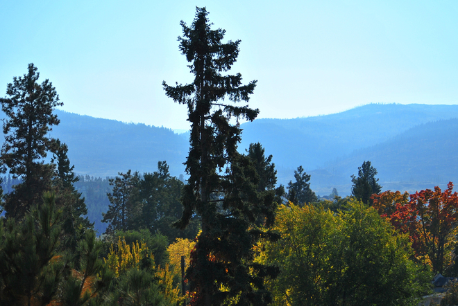 Thanksgiving Black Pine South Kelowna, British Columbia Canada