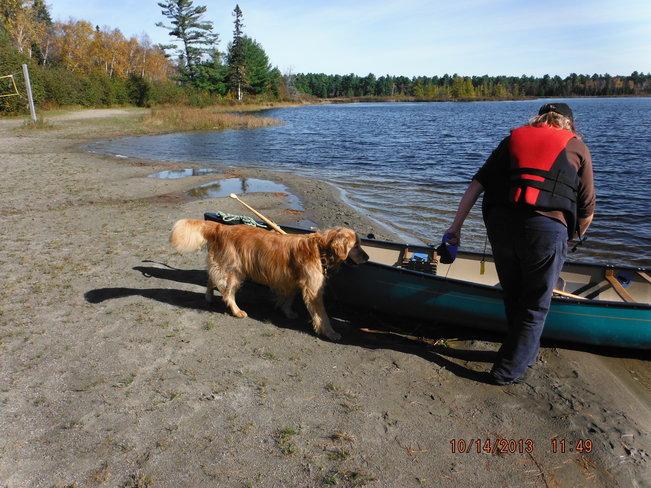 Mans' Best Friend Britt, Ontario Canada