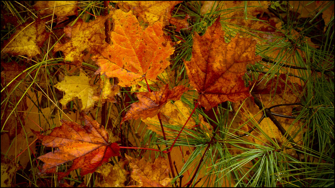On Pearson, wet leaves on the ground. Elliot Lake, Ontario Canada