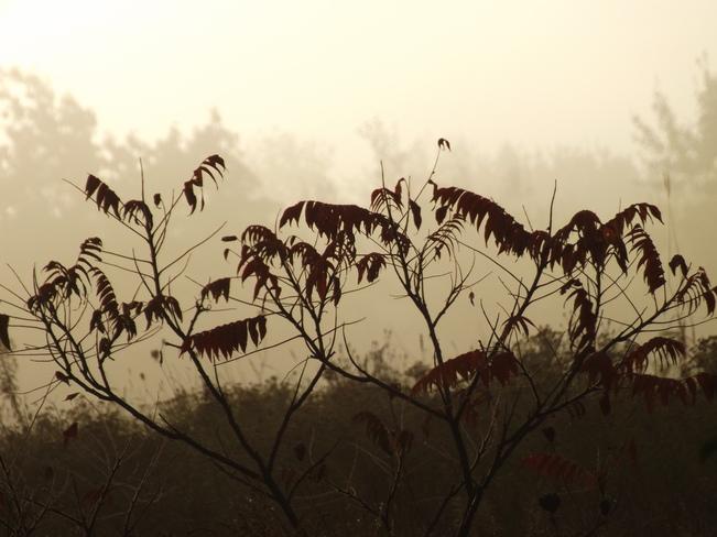 morning has broken. New Minas, Nova Scotia Canada