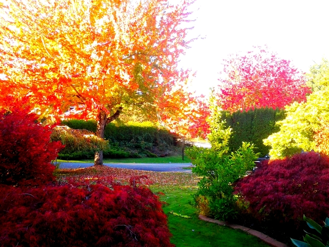 Another glorious fall day in Surrey, B.C. Surrey, British Columbia Canada