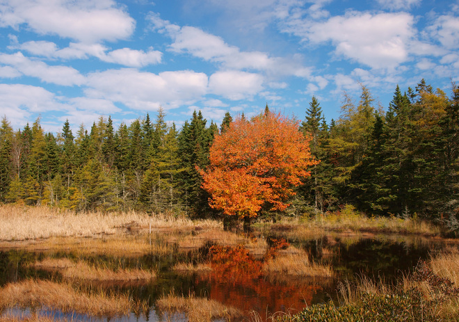 pond in the autumn meadow Yarmouth, Nova Scotia Canada