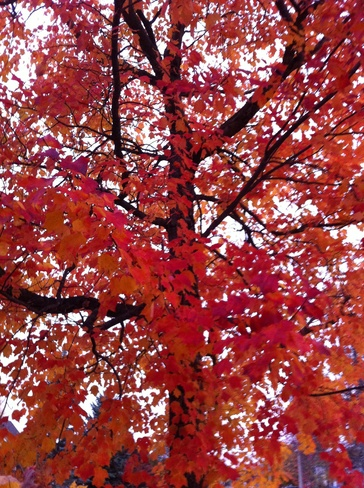Fall in Moncton Moncton, New Brunswick Canada