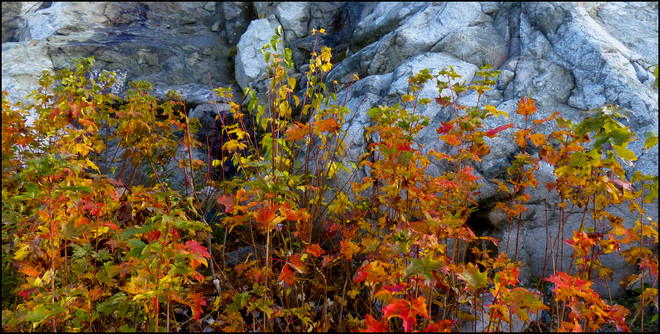 Esten Dr. big rock, last of the leaves. Elliot Lake, Ontario Canada