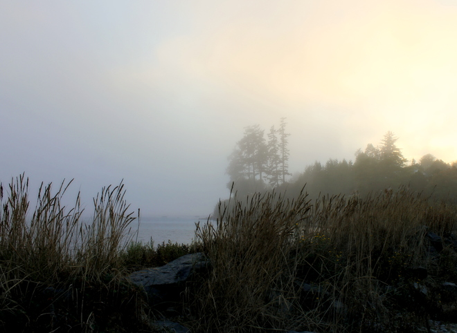morning fog Sooke, British Columbia Canada