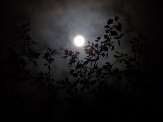 Moon From my balcony Greater Sudbury, Ontario Canada