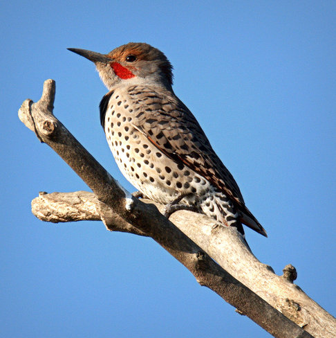 Flicker On The Lookout