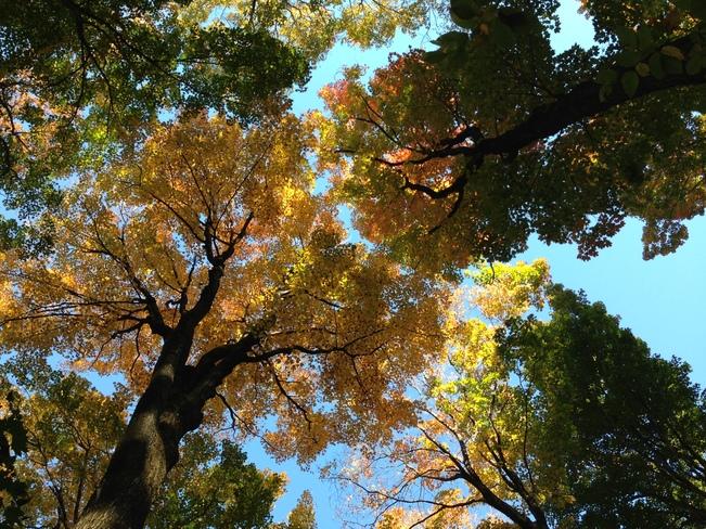 fall trees Montréal, Quebec Canada