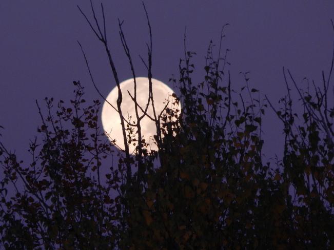 Hunter's Moon Kingston, Nova Scotia Canada