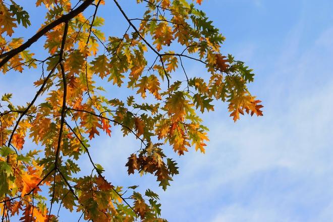 Autumn Sky Laval, Quebec Canada