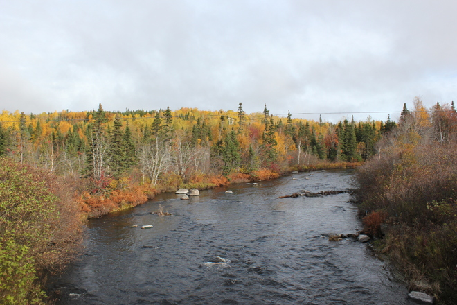 fall colors Gander, Newfoundland and Labrador Canada