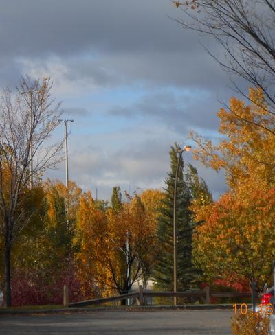 Pretty Color of Fall Calgary, Alberta Canada