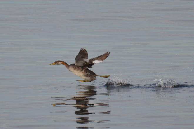 Running On Water Sunshine Coast, British Columbia Canada