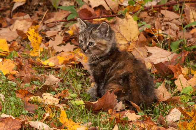 Another one of the Kittens Singhampton, Ontario Canada