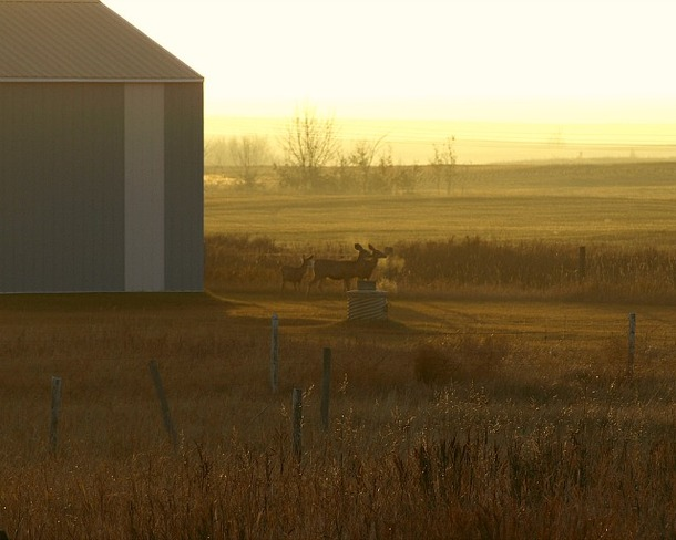 Morning Family Outing Oyen, Alberta Canada