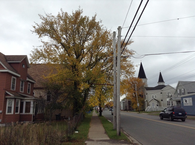 Leaves in Different Colors Sydney, Nova Scotia Canada