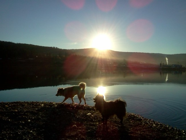 Tink & Angel in Sunset Williams Lake, British Columbia Canada