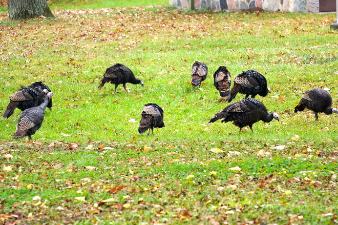 Freedom from Thanksgiving Rondeau Park, Ontario Canada