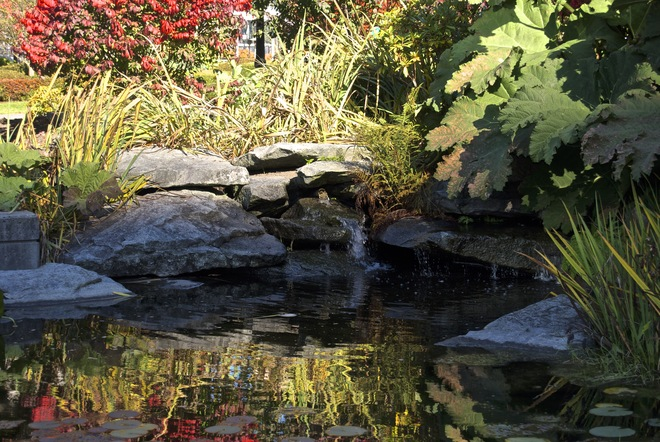 Cardero Park Lilly Pond Vancouver, British Columbia Canada